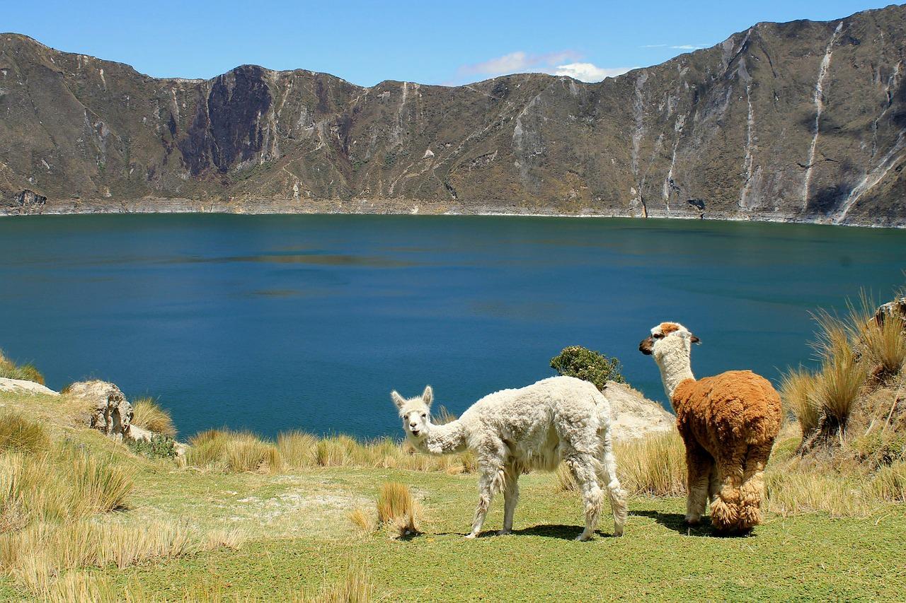 Quilotoa Llamas Ecuador