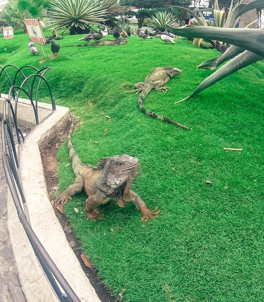 ecuador-guayaquil-parque-de-las-iguanas